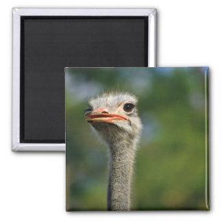 Ostrich Refrigerator Magnet