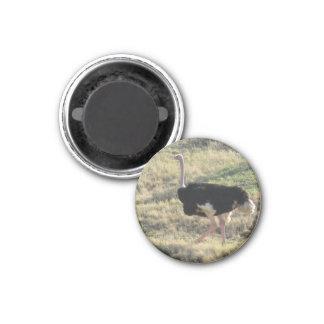 Ostrich Magnet