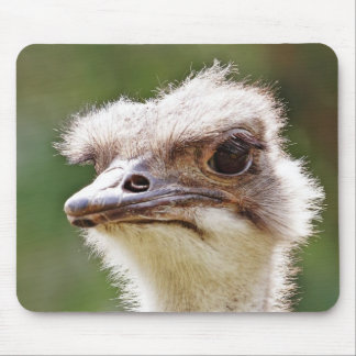 Ostrich! Mouse Pad