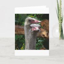 Ostrich Pair Card