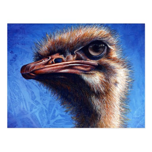 Ostrich Post Card