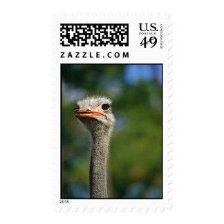 Ostrich Postage