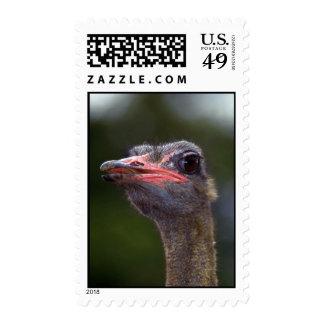 Ostrich Stamp