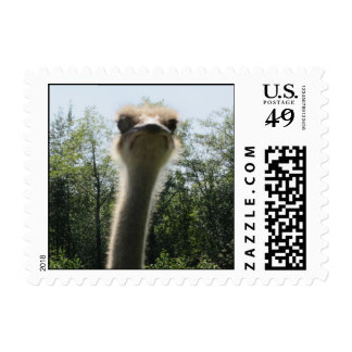 Ostrich Postage Stamp