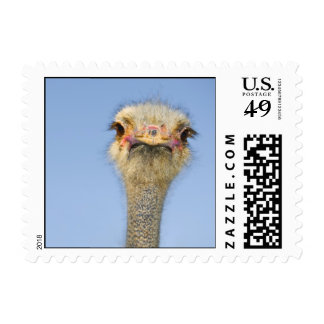 Ostrich Postage Stamps