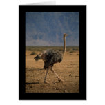 Ostrich Profile Cards