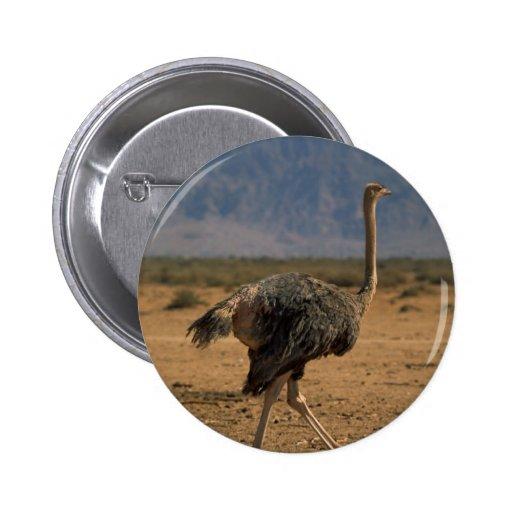 Ostrich Profile Pins