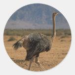Ostrich Profile Stickers