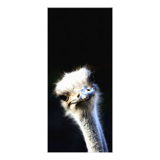 Ostrich Personalized Rack Card