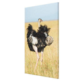 Ostrich Ruffling its Feathers Canvas Print