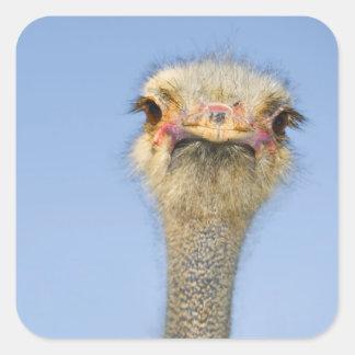 Ostrich Square Stickers