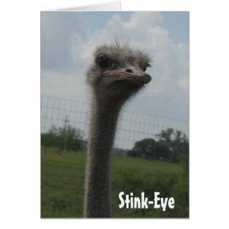 Ostrich Stink-Eye notecard