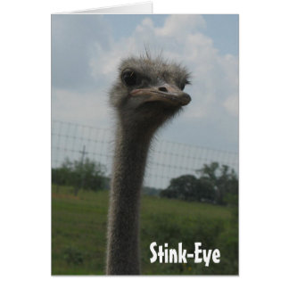 Ostrich Stink-Eye notecard Cards