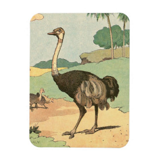 Ostrich Storybook Drawing Magnet