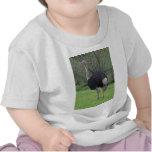Ostrich T Shirts