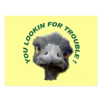 Ostrich trouble post card