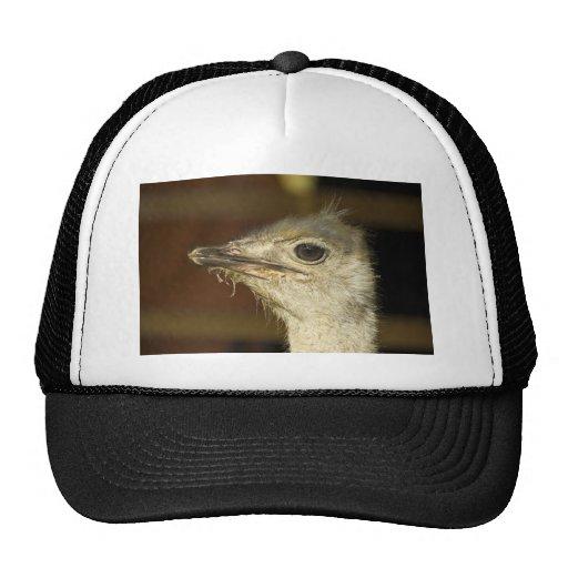 ostrich trucker hats