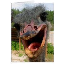 Ostrich What's Up Card