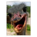 Ostrich What's Up Card Greeting Card