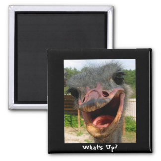 Ostrich What's Up Square Magnet
