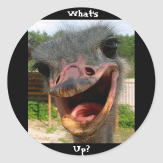 Ostrich What's Up Text Sticker