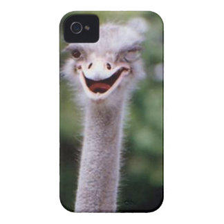 Ostrich Winking - Funny iPhone 4 Cover
