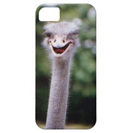 Ostrich Winking - Funny iPhone 5 Case