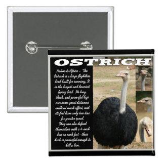 OSTRICH with Description Pin