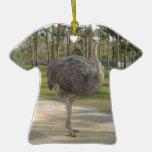 Ostriche curioso ornamentos para reyes magos