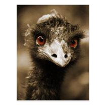 Ostriches Look postcard