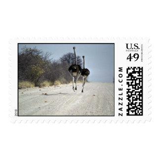 Ostriches running postage