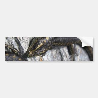 Otago Skink Bumper Sticker