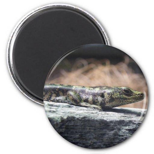 Otago Skink Magnet
