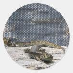 Otago Skink Round Stickers