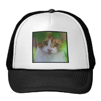 Otange Tabby Cat Cap