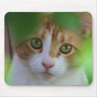 Otange Tabby Cat Mouse Pad