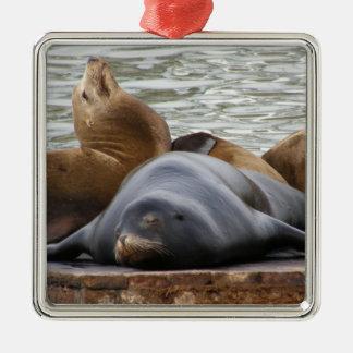 Otarias que duermen en el embarcadero ornamento para arbol de navidad