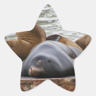 Otarias que duermen en el embarcadero calcomanía forma de estrella personalizada