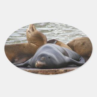 Otarias que duermen en el embarcadero calcomania de oval