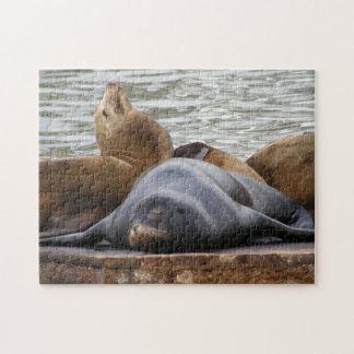 Otarias que duermen en el embarcadero puzzles con fotos