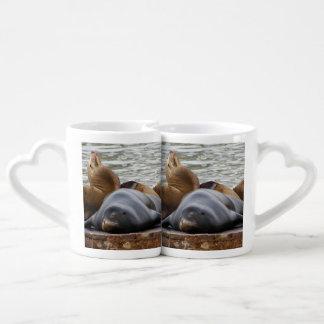 Otarias que duermen en el embarcadero set de tazas de café