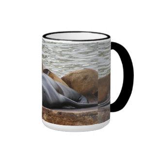 Otarias que duermen en el embarcadero tazas de café