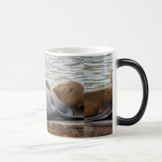 Otarias que duermen en el embarcadero taza de café