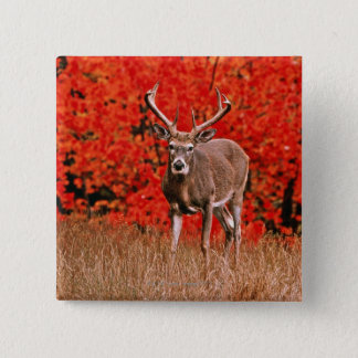 Other common name: Virginia deer. Near Lake Pinback Button