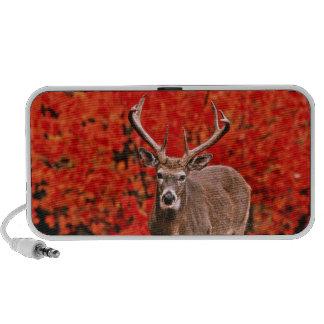 Other common name: Virginia deer. Near Lake Travelling Speaker