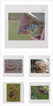 OTHER OCCASSIONS Post- & Greeting Cards Collection