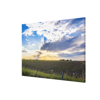 Other Sunset Canvas Print