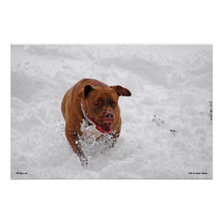 Otis in the Snow Poster