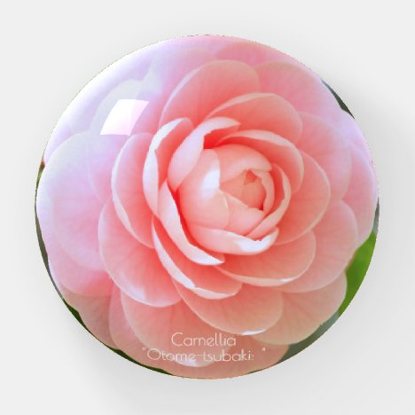 Otome-tsubaki: Camellia [Glass Paper Weight] Paperweight