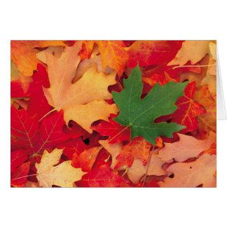 otoño (15) felicitación